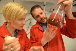 Silje Forbord von SINTEF und Andrew Quale Lavik, NTNU, prüfen rote Algen©Thor Nilsen/SINTEF